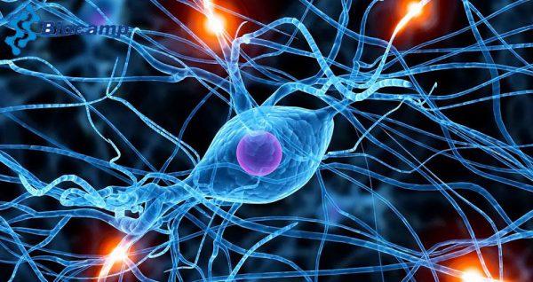 تجهیزات آزمایشگاهی علوم اعصاب