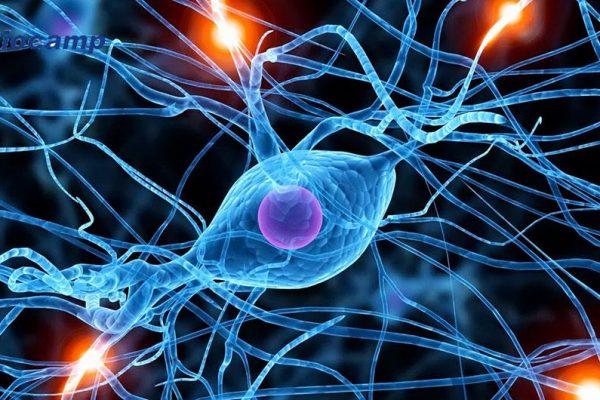 تجهیزات آزمایشگاهی ساخت تجهیزات آزمایشگاهی علوم اعصاب در کشور brain 600x400