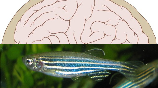 ۶۴۰humanzebrafish