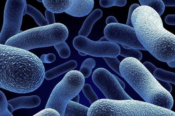 درمان سرطان سینه اثر شگفت انگیز باکتری ها در بهبود و درمان سرطان سینه bacteria00 600x400