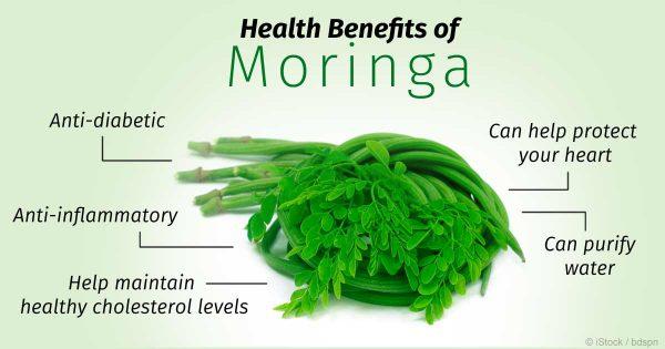 درمان گیاهی زخم پای دیابتی با درخت Moringa oleifera