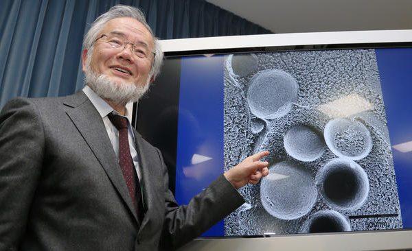 جایزه نوبل ۲۰۱۶ در زمینه پزشکی به مطالعات مربوط به اتوفاژی تعلق گرفت جایزه نوبل ۲۰۱۶ در زمینه پزشکی به مطالعات مربوط به اتوفاژی تعلق گرفت la 1475492933 snap photo 600x366