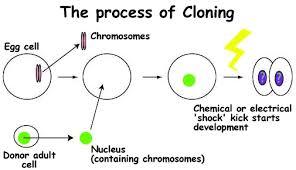 kk  کلونینگ در زیست شناسی kk