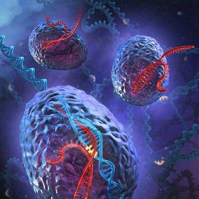 نقش CRISPR در کاهش مرگ سلول های پانکراس و افزایش ترشح انسولین نقش CRISPR در کاهش مرگ سلول های پانکراس و افزایش ترشح انسولین photo 2017 02 01 23 40 58 400x400