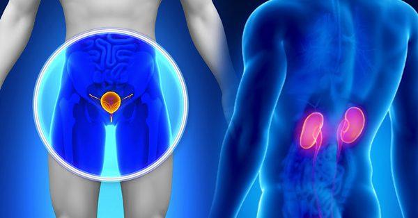 بیوانفورماتیک و سرطان پروستات